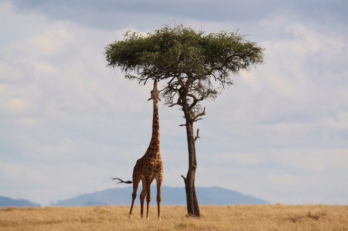 Kenia na wakacje
